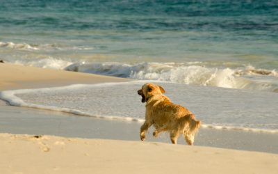 Pet Friendly Hervey Bay